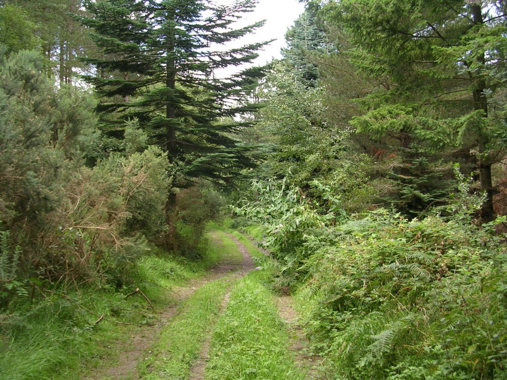 fciwomenswrestling.com article, wicklowcountywalks.com photo